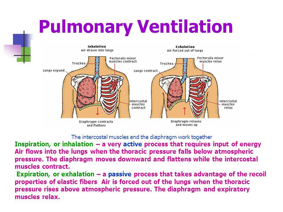 Pulmonary Ventilation