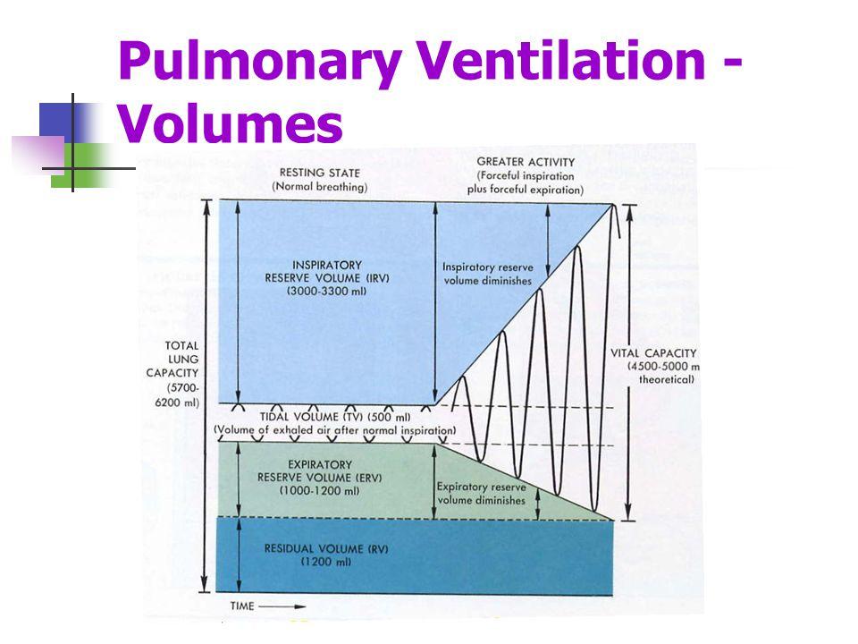 Pulmonary Ventilation - Volumes