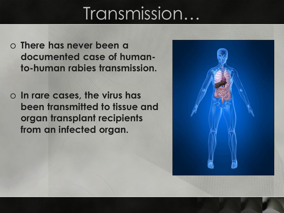 Transmission… There has never been a documented case of human-to-human rabies transmission.