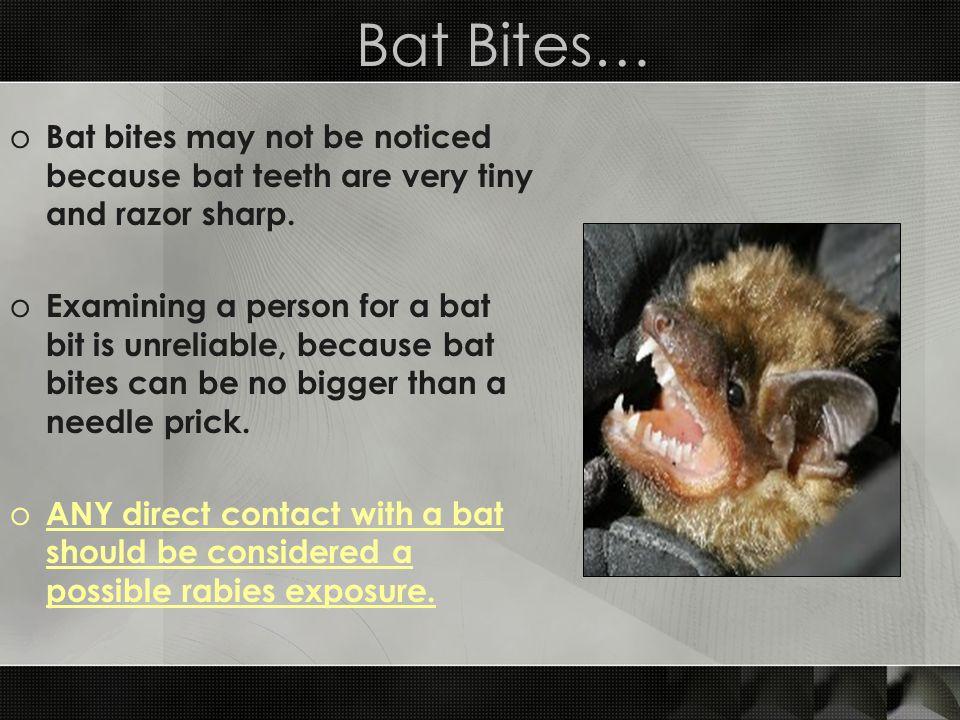 Bat Bites… Bat bites may not be noticed because bat teeth are very tiny and razor sharp.