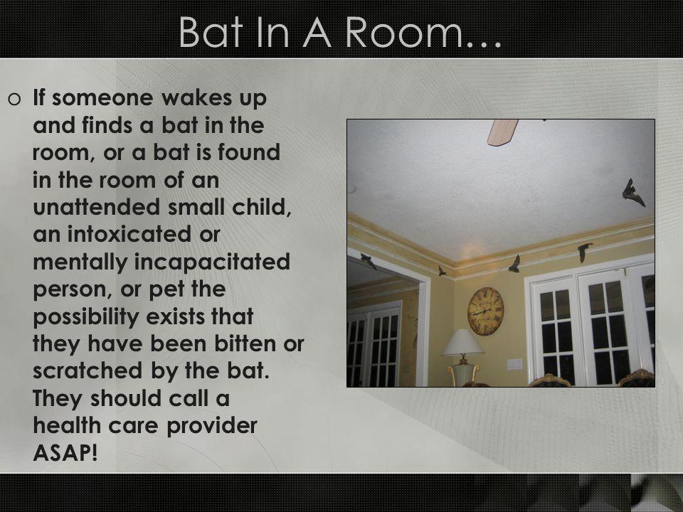 Bat In A Room…