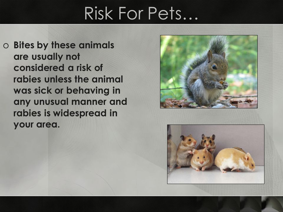 Risk For Pets…