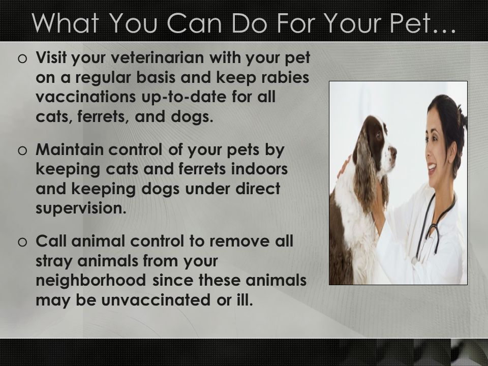 What You Can Do For Your Pet…