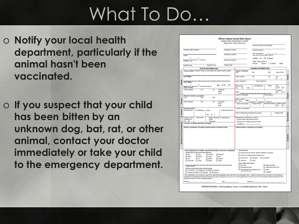What To Do… Notify your local health department, particularly if the animal hasn t been vaccinated.