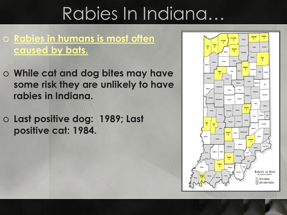 Rabies In Indiana… Rabies in humans is most often caused by bats.