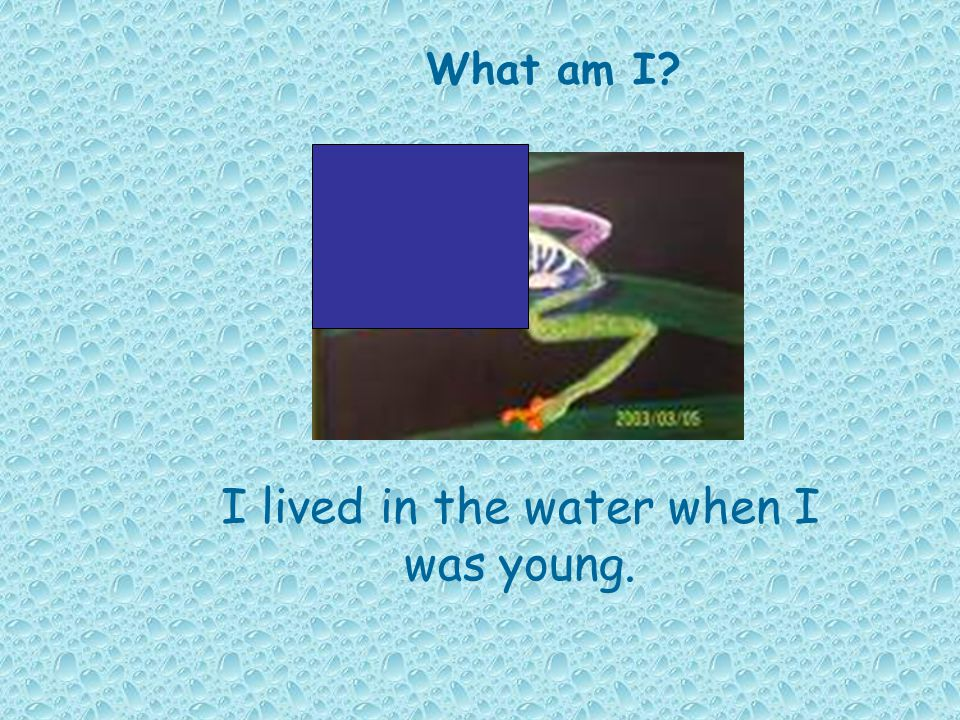 I lived in the water when I was young.