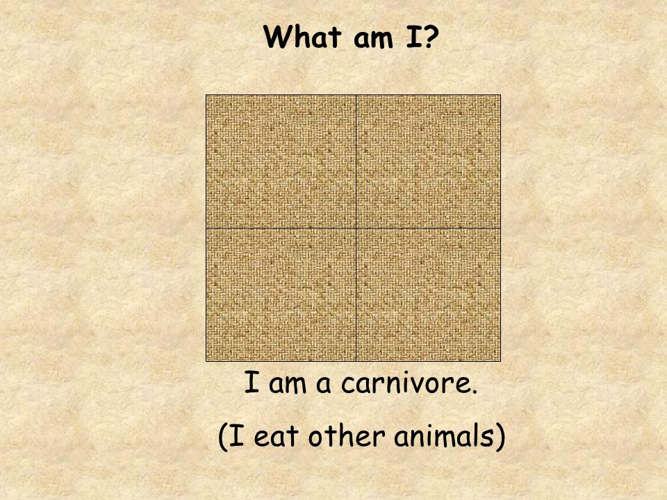 What am I I am a carnivore. (I eat other animals)