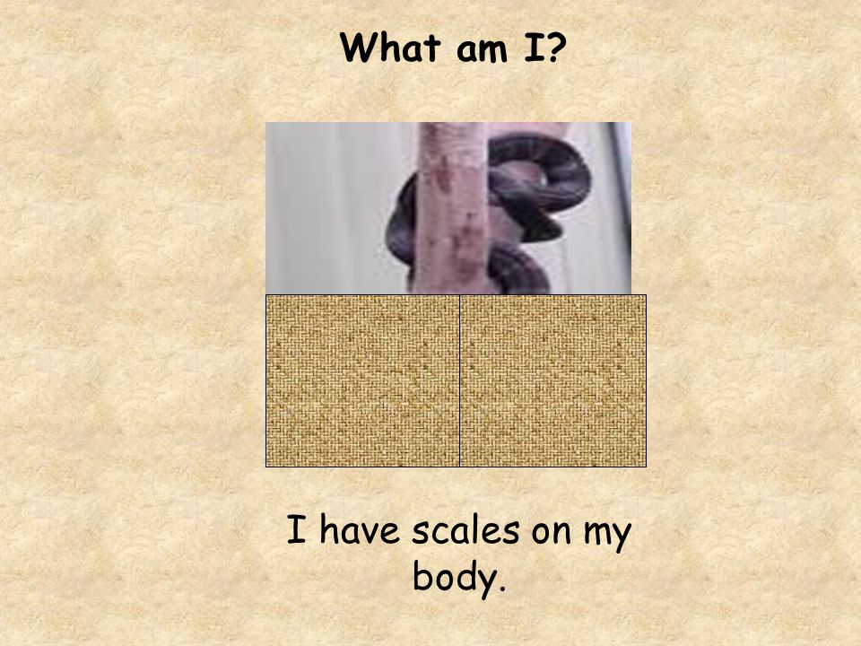 What am I I have scales on my body.