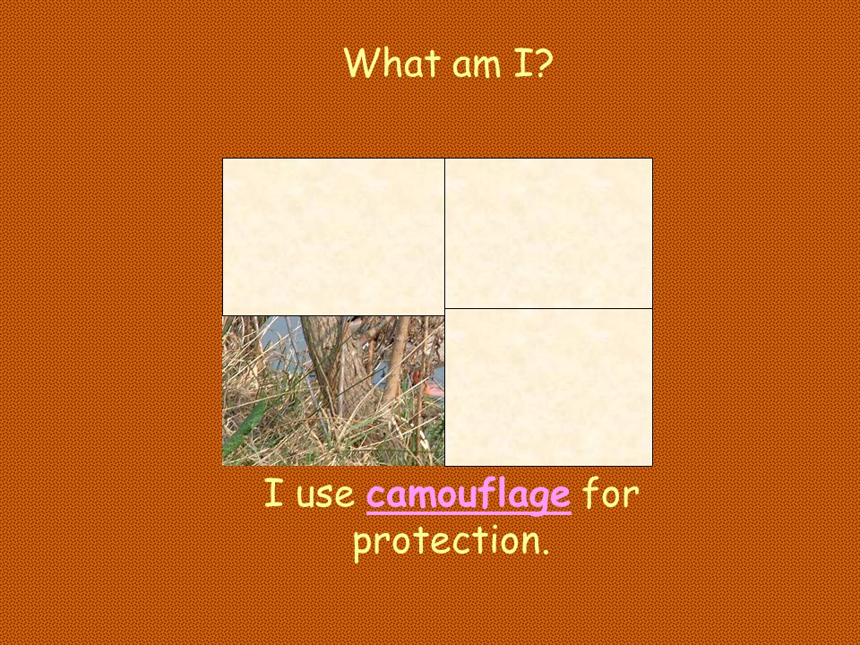 I use camouflage for protection.