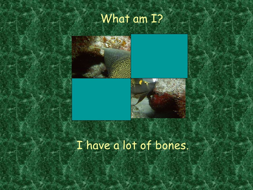What am I I have a lot of bones.