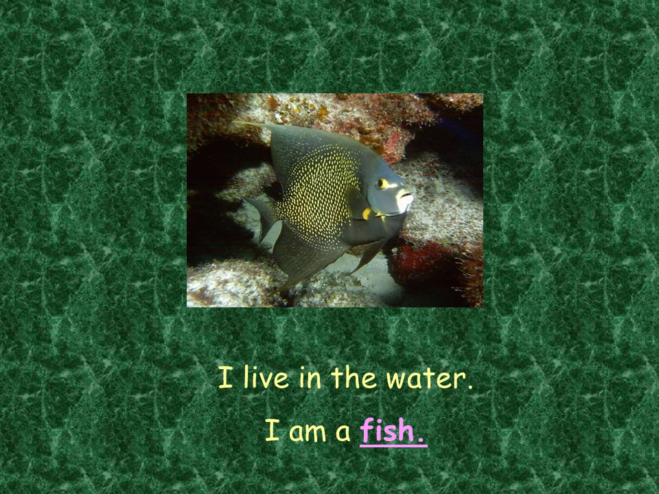 I live in the water. I am a fish.