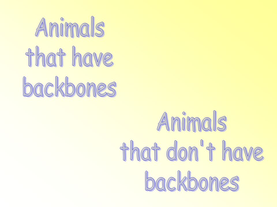 Animals that have backbones Animals that don t have backbones