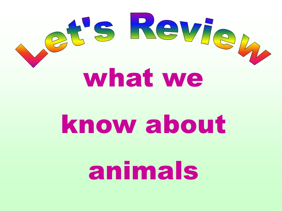 Let s Review what we know about animals