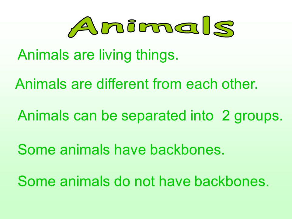 Animals Animals are living things. Animals are different from each other. Animals can be separated into 2 groups.
