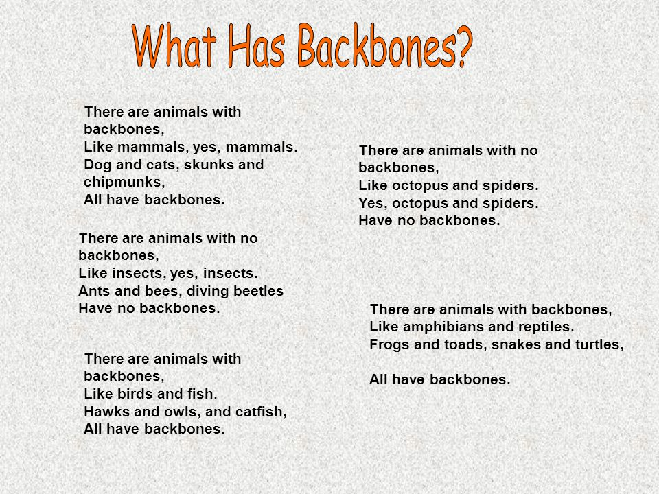 What Has Backbones There are animals with backbones,