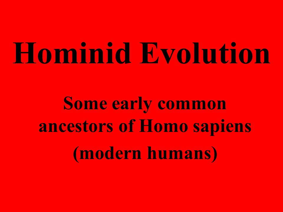 Some early common ancestors of Homo sapiens (modern humans)