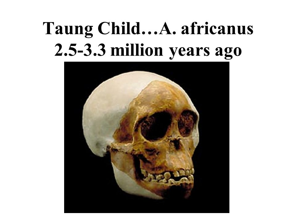 Taung Child…A. africanus 2.5-3.3 million years ago