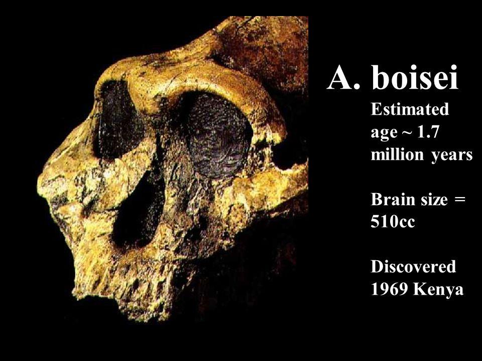 A. boisei Estimated age ~ 1