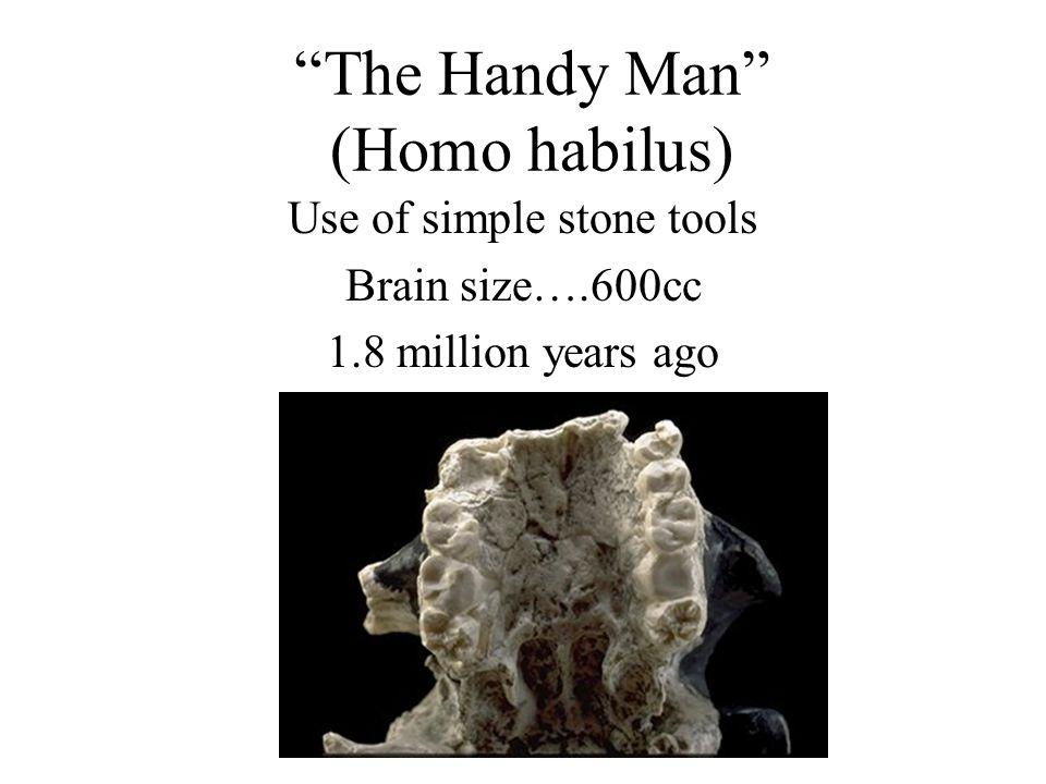 The Handy Man (Homo habilus)