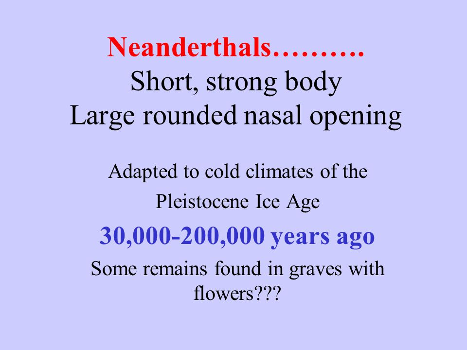Neanderthals………. Short, strong body Large rounded nasal opening