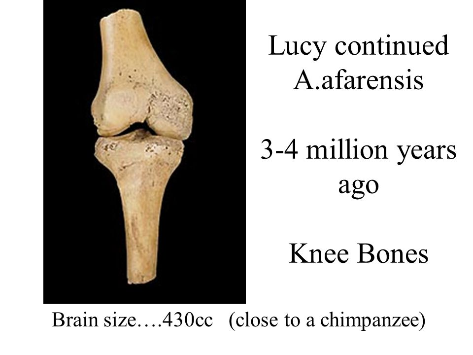 Lucy continued A.afarensis 3-4 million years ago Knee Bones
