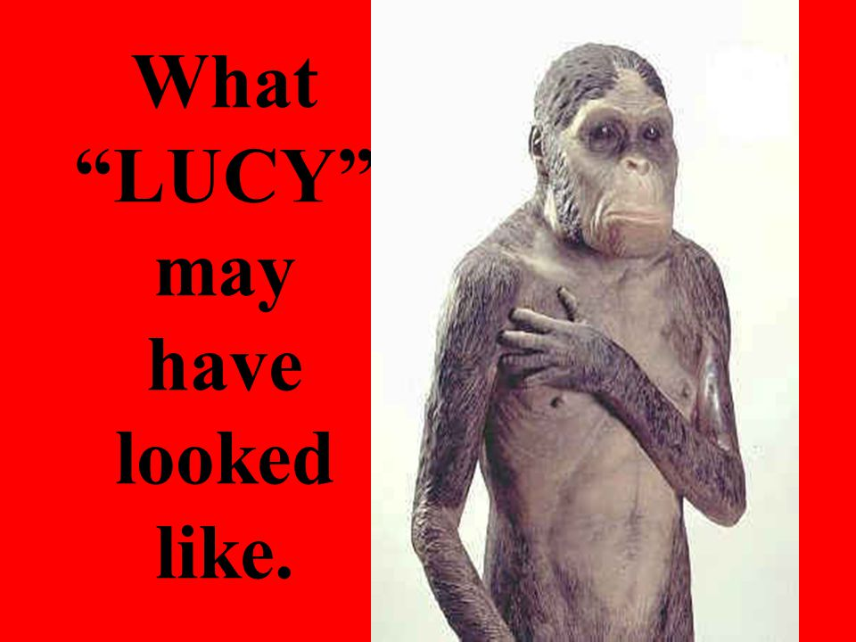 What LUCY may have looked like.