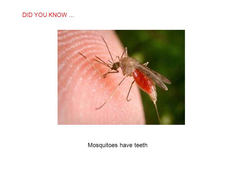 DID YOU KNOW ... Mosquitoes have teeth