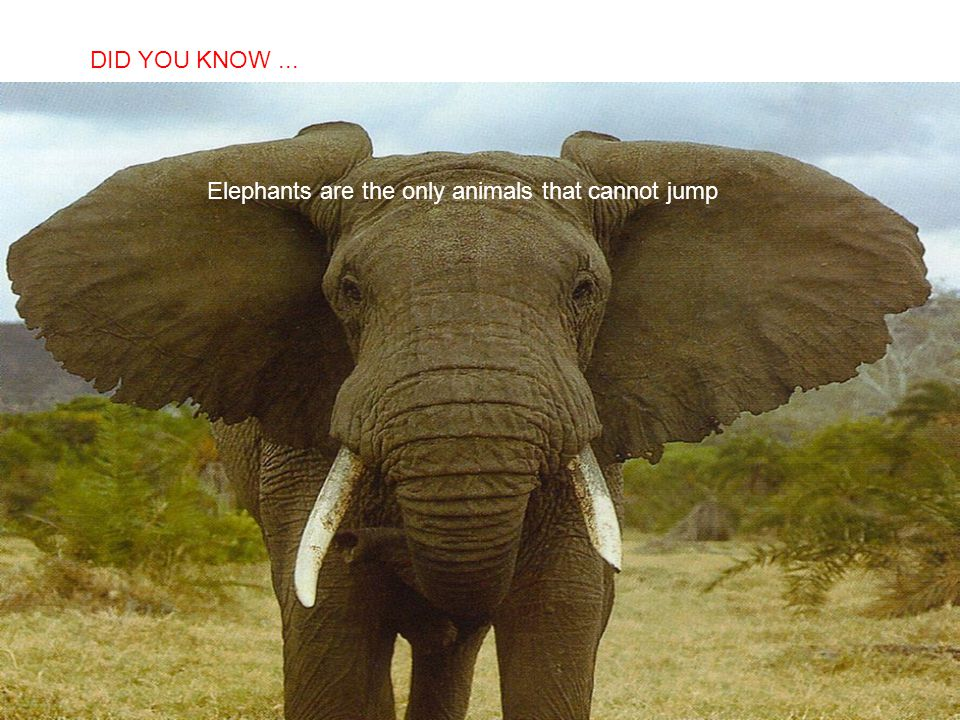 Elephants are the only animals that cannot jump
