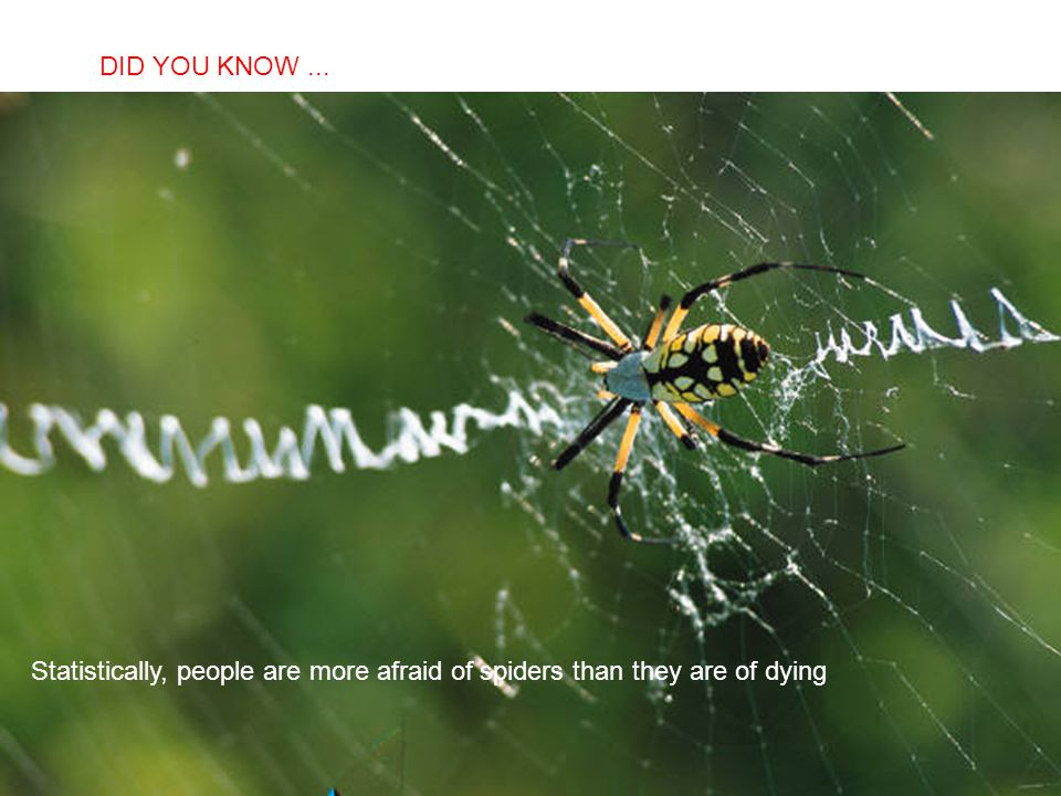 DID YOU KNOW ... Statistically, people are more afraid of spiders than they are of dying