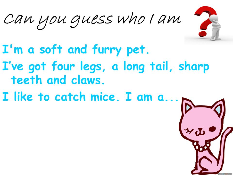 Can you guess who I am I m a soft and furry pet.