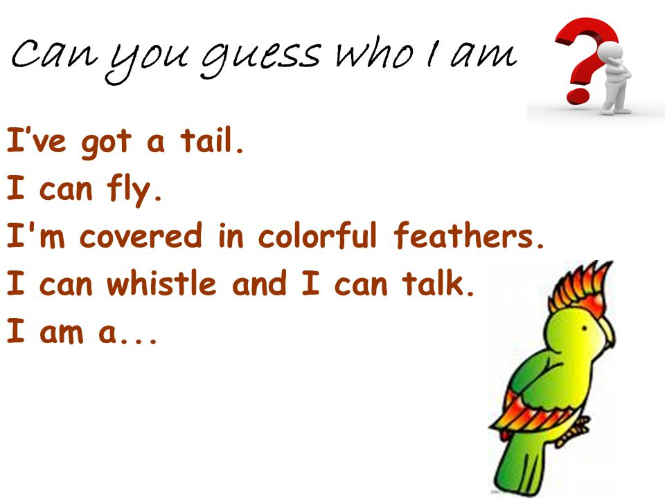 Can you guess who I am I've got a tail. I can fly.