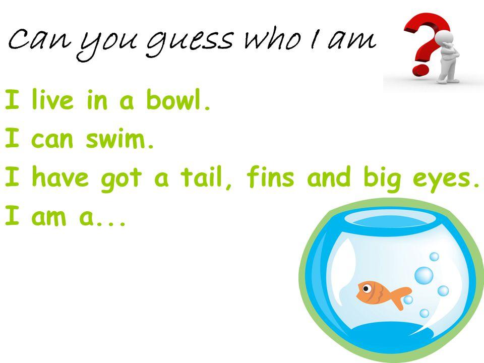 Can you guess who I am I live in a bowl. I can swim.