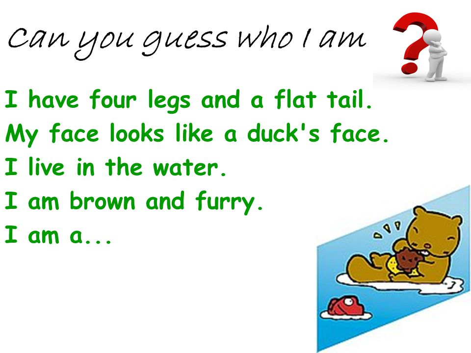Can you guess who I am I have four legs and a flat tail.