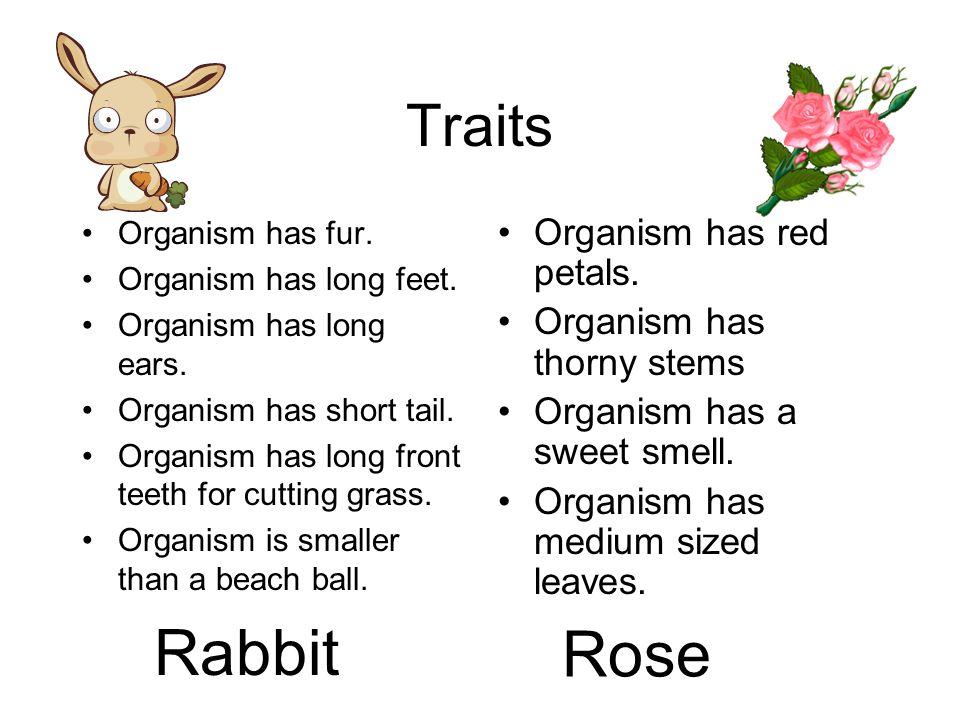 Rabbit Rose Traits Organism has red petals. Organism has thorny stems