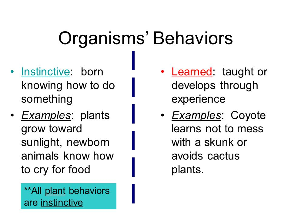 Organisms' Behaviors Instinctive: born knowing how to do something