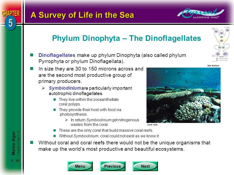 Phylum Dinophyta – The Dinoflagellates