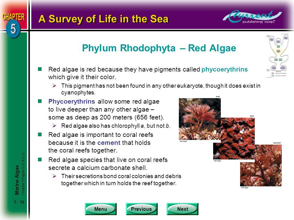 Phylum Rhodophyta – Red Algae