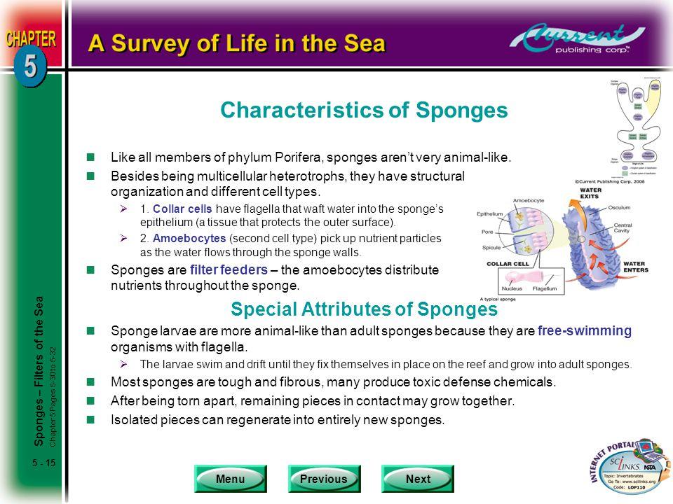 Characteristics of Sponges