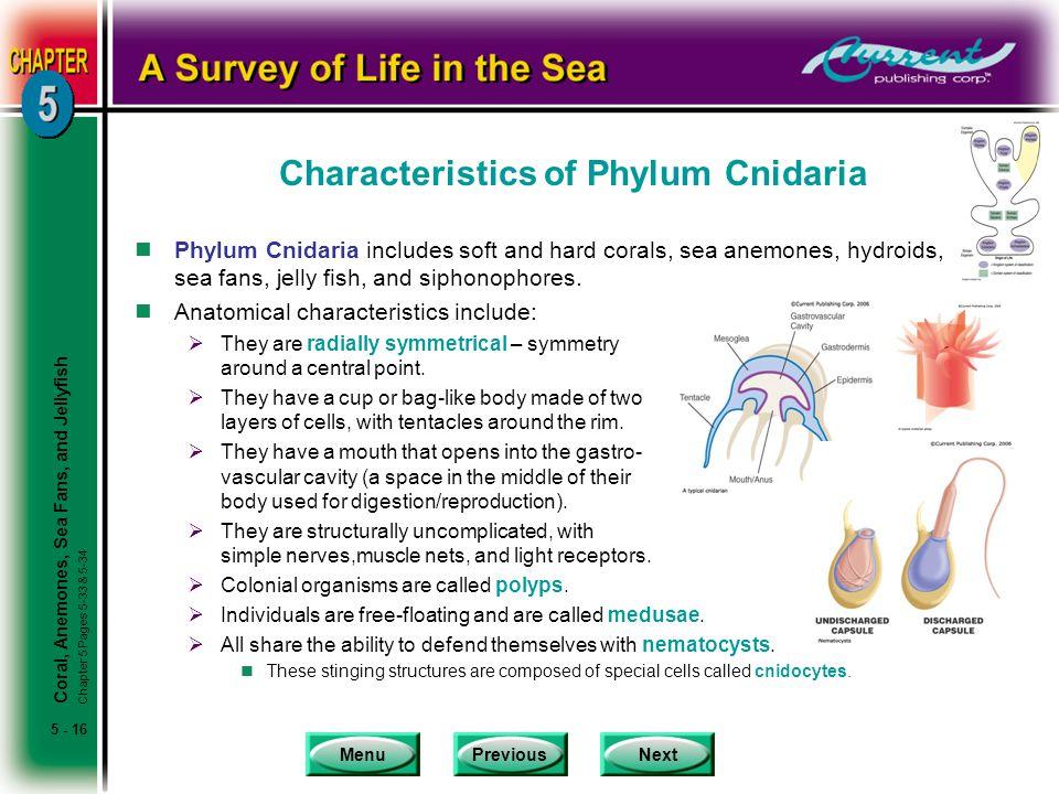 Characteristics of Phylum Cnidaria