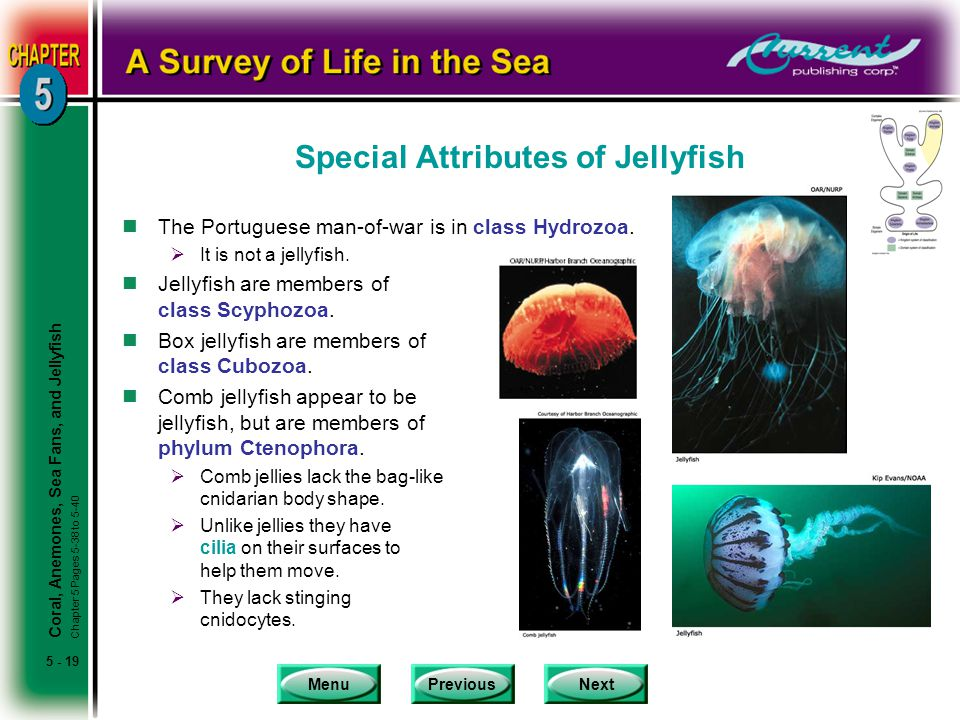 Special Attributes of Jellyfish