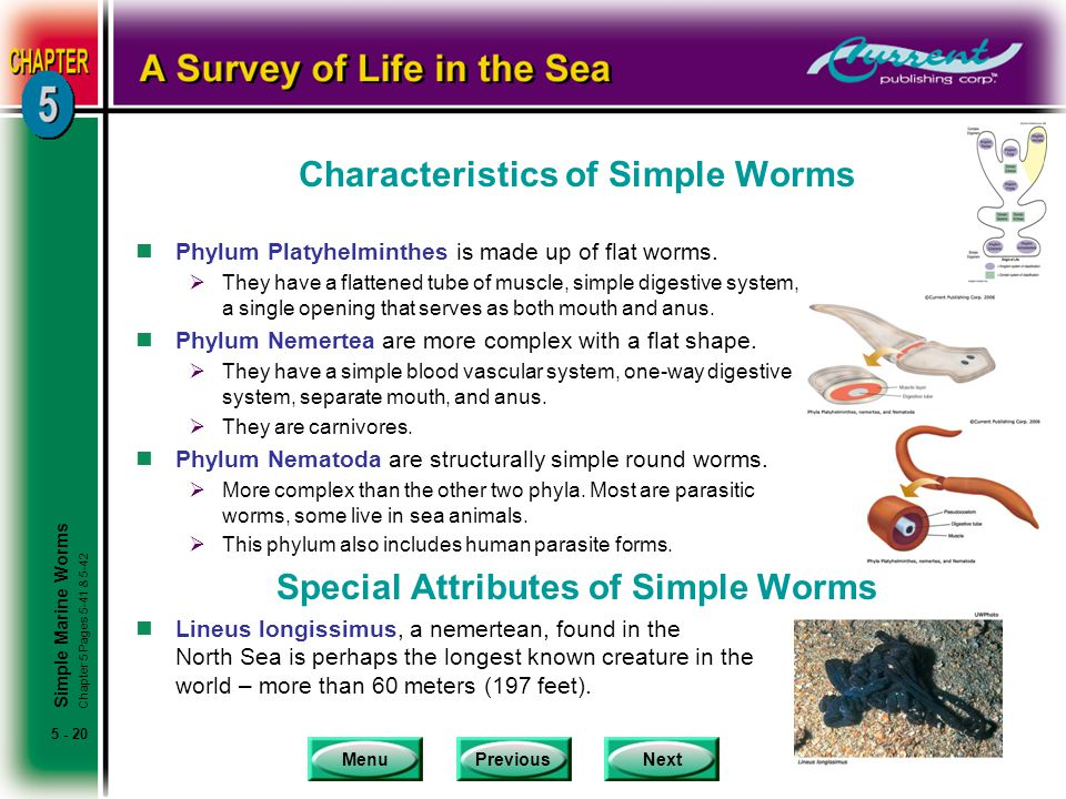 Characteristics of Simple Worms
