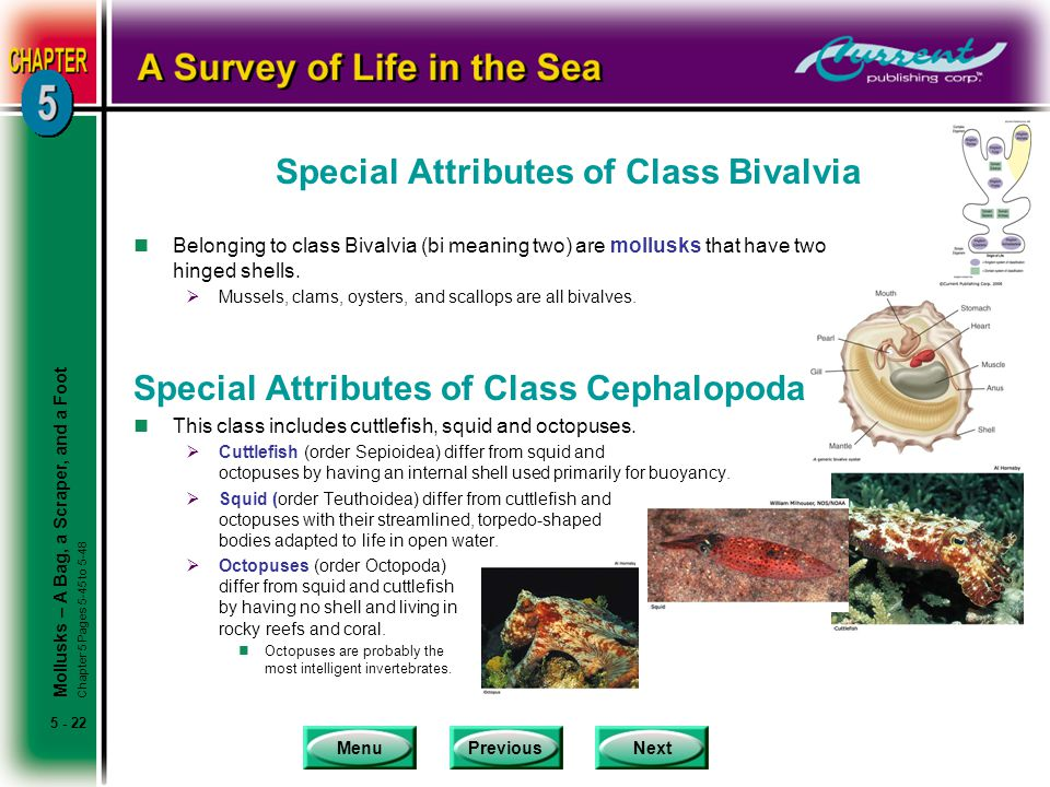 Special Attributes of Class Bivalvia