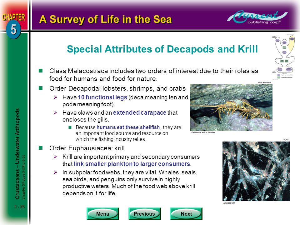Special Attributes of Decapods and Krill