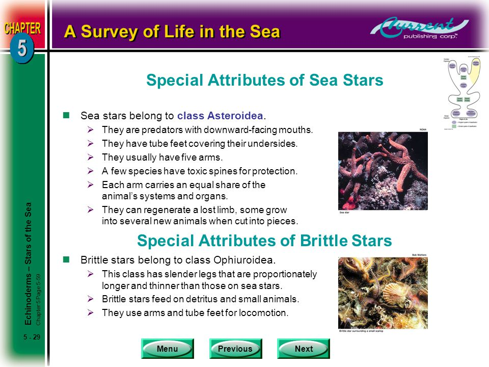 Special Attributes of Sea Stars