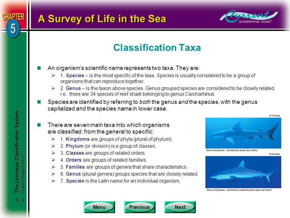 Classification Taxa An organism's scientific name represents two taxa. They are: