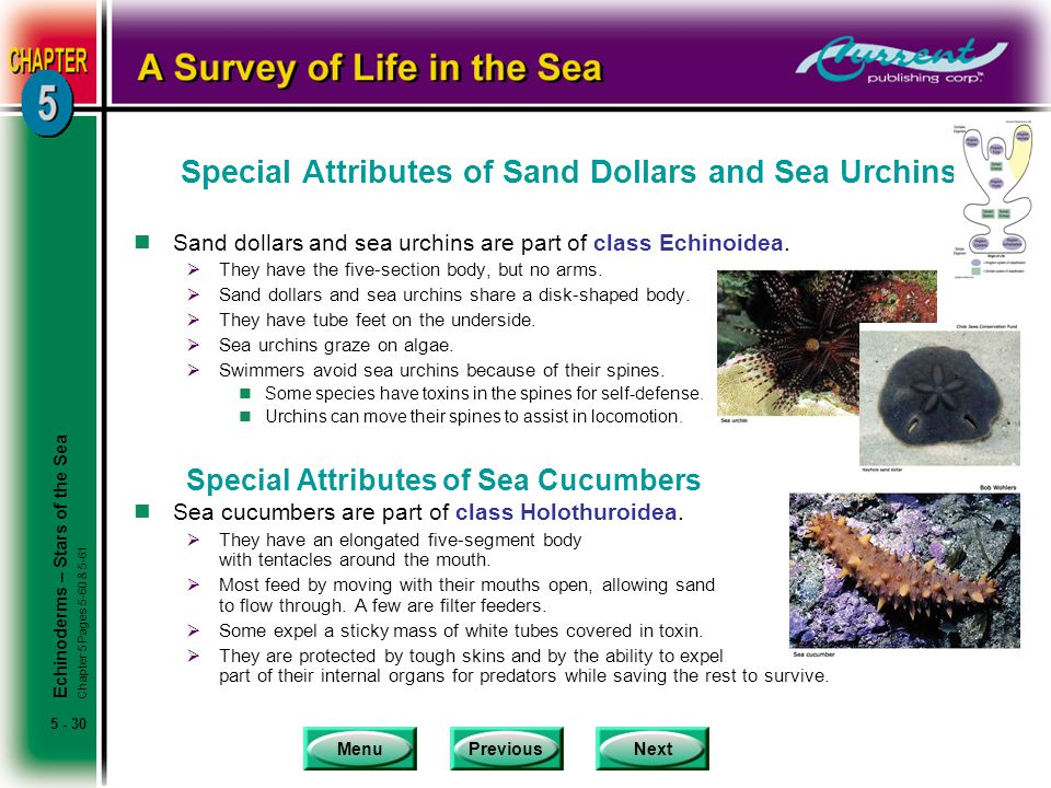 Special Attributes of Sand Dollars and Sea Urchins