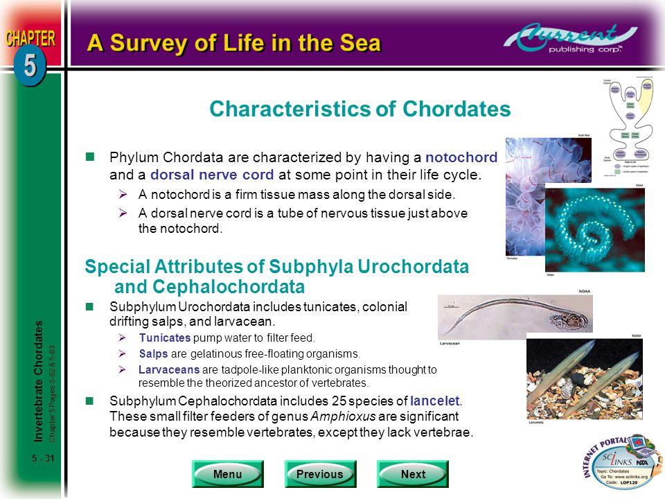 Characteristics of Chordates