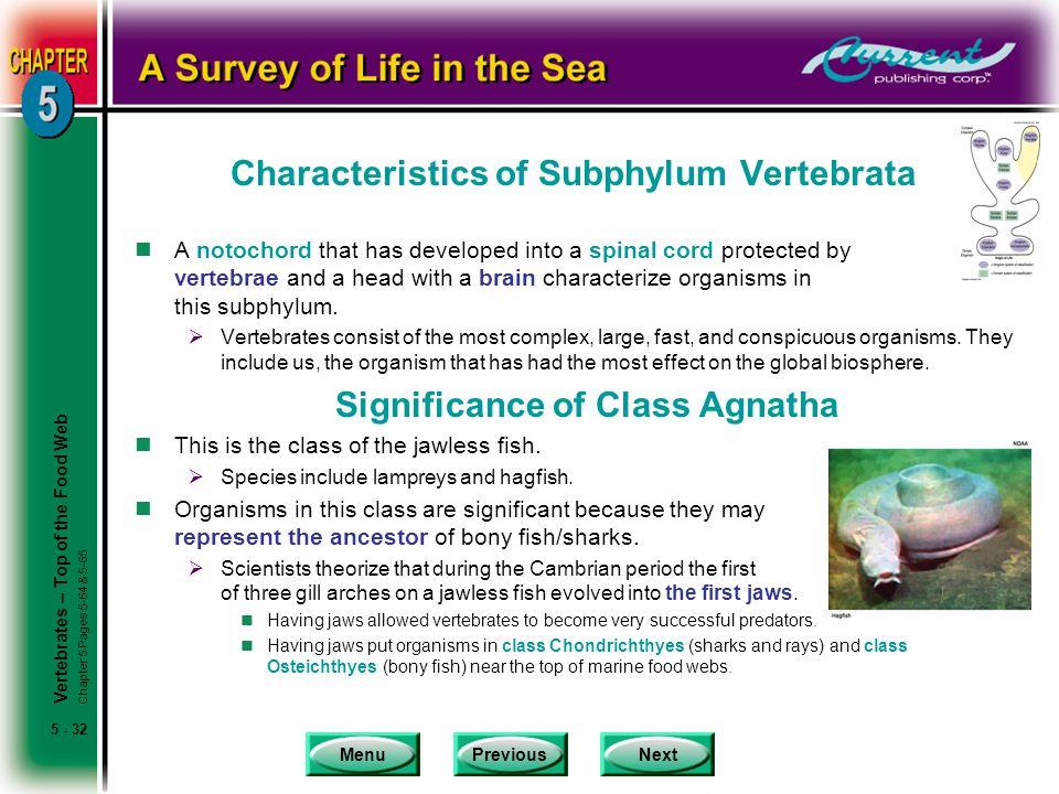 Characteristics of Subphylum Vertebrata