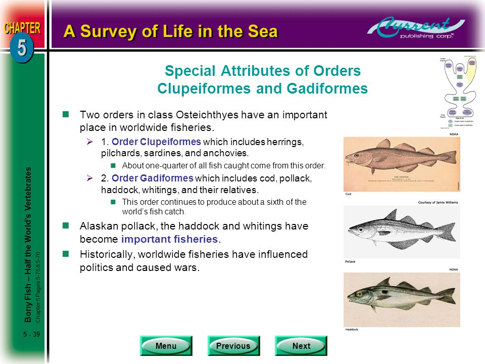 Special Attributes of Orders Clupeiformes and Gadiformes
