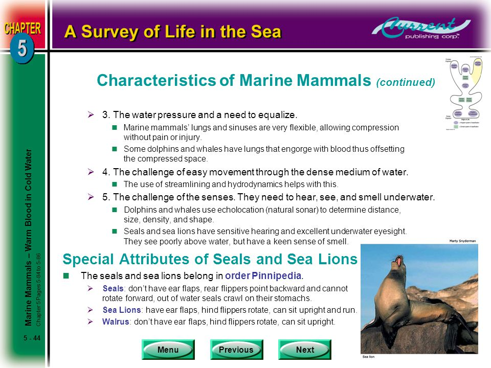 Characteristics of Marine Mammals (continued)